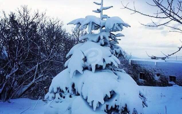 مصلحة الابحاث العلمية الزراعية: الطقس سيتحول في 13 الحالي الى ماطر مع رياح قوية