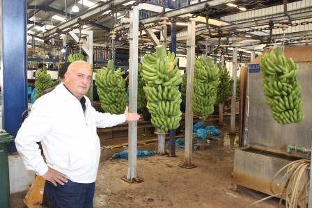 مزارعو الجنوب ناشدوا وزير الزراعة حل مشكلة تصدير الموز الى سوريا