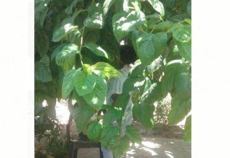 العثور على عاملة اثيوبية مشنوقة في حديقة منزل في بلدة بليدا!
