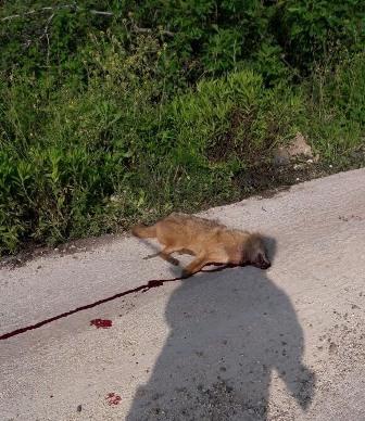 اصابة مواطن بجروح خطيرة جراء مهاجمة كلب عند نبع الحاصباني