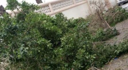 الأمطار والرياح اقتلعت عمود كهرباء وشجرة في مدينة صيدا والأضرار مادية