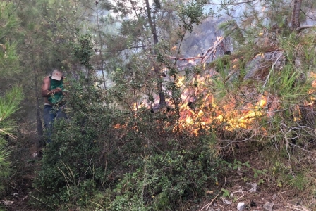 كارثة القبيات: كل الحرائق «مفتعلة»