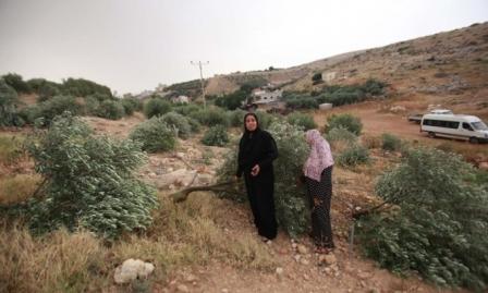 اعتقالات بالضفة ومستوطنون يقطعون مئات الأشجار بالخضر