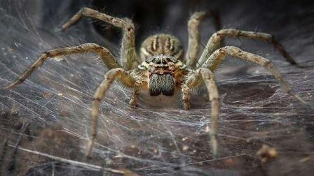 سم العناكب لعلاج حالة مرضية نادرة يصعب علاجها!