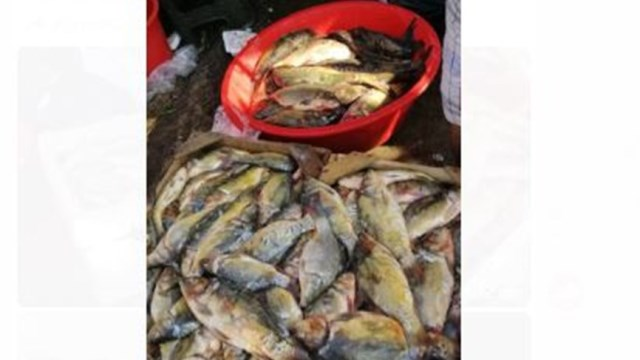 مصادرة كميات كبيرة من السمك الملوّث في بيروت وتوقيف البائعين