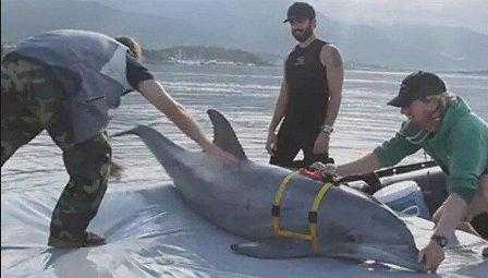 العدو الاسرائيلي يدرّب الدلافين لإكتشاف غواصي حزب الله وحماس