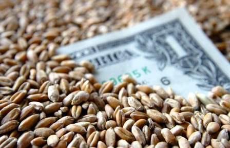 نقيب مستوردي القمح: ارتفاع الأسعار العالمية سيتواصل والحل بيد الدولة