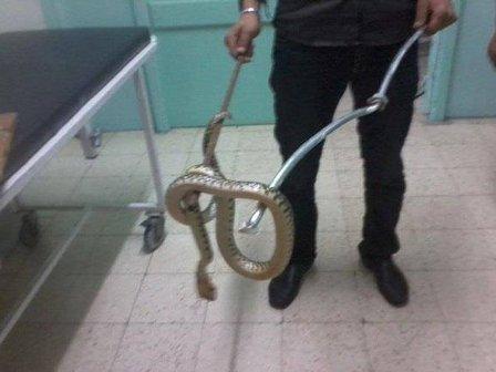 بالصورة- ثعبان ضخم يثير الذعر في مطار القاهرة!