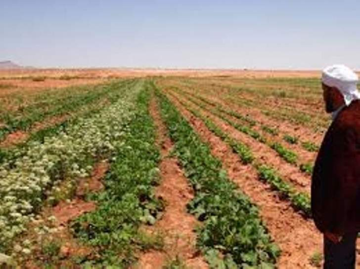 رئيس اتحاد التعاونيات الزراعية يطالب بالتعويض على إتلاف المزروعات الملوثة بالمياه الآسنة