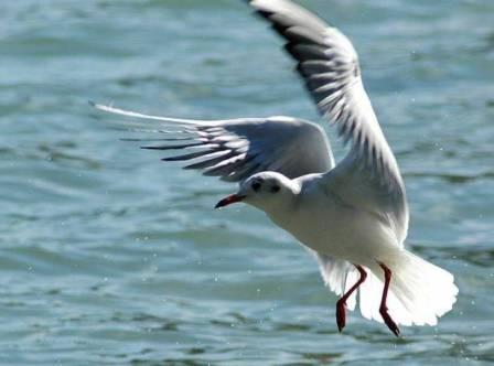 ما هي طيور النوّرس واهميتها؟