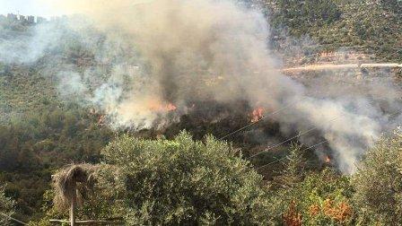 حريق كبير في أحراج الجاهلية والسكان يناشدون المعنيين التدخل