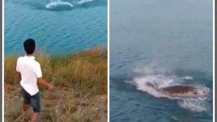 فيديو مروع – شاب يرمي كلباً صغيراً في النهر لإطعام تمساح جائع!
