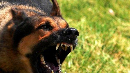 كلب نهش ابن الأربع سنوات... وقتله!