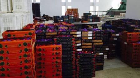 المزارعون دقّوا ناقوس الخطر والصادرات إلى تدهور