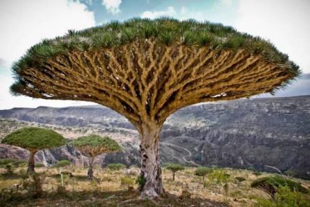 ما هي أجمل الأشجار في العالم؟