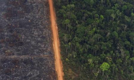 البرازيل: مقتل أصلانيين وسط استهداف مستمر لحراس غابات الأمازون
