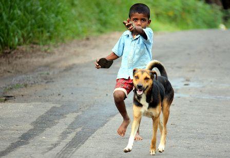 الحيوانات الأليفة تزيد المناعة ضد الأمراض عند الأطفال