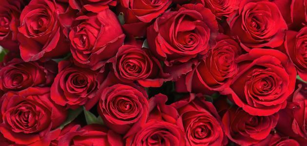 ليلة عيد الحب ...