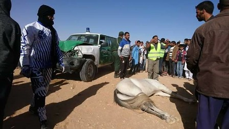 بالفيديو.. حادث غريب بين سيارة أمنية ومجموعة خيول