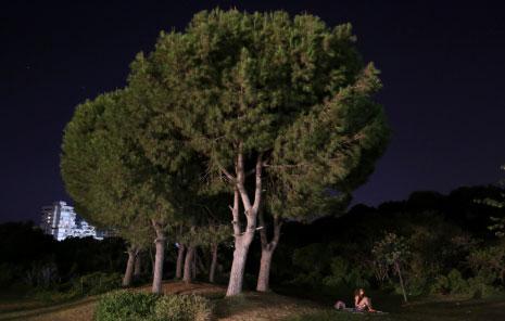 من 1.250.000 متر مربّع إلى 330 ألف متر مربّع: المجلس البلدي يواصل سياسة قضم حرج بيروت