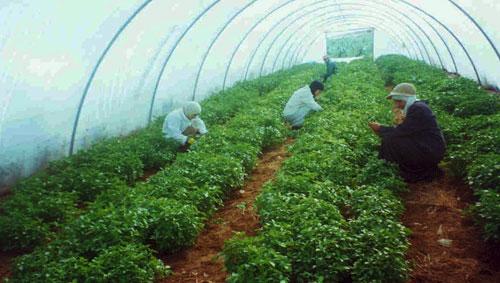 مزارعو بعلبك: لايقاف ضخ المياه من الآبار والتفتيش عن مصادر جديدة