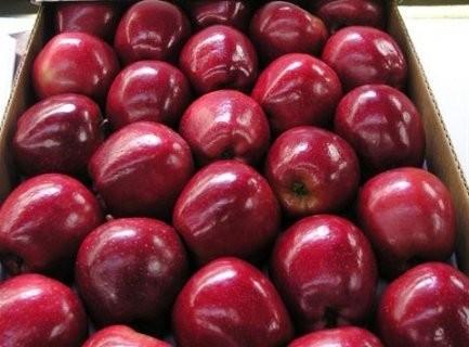 على مزارعي التفاح تحضير مستنداتهم.. الكشف بدأ