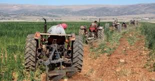رئيس نقابة مزارعي القمح طالب الحكومة بدعم الموسم
